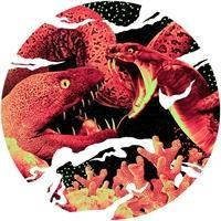 various-artists-eel-behaviour-sawtooth